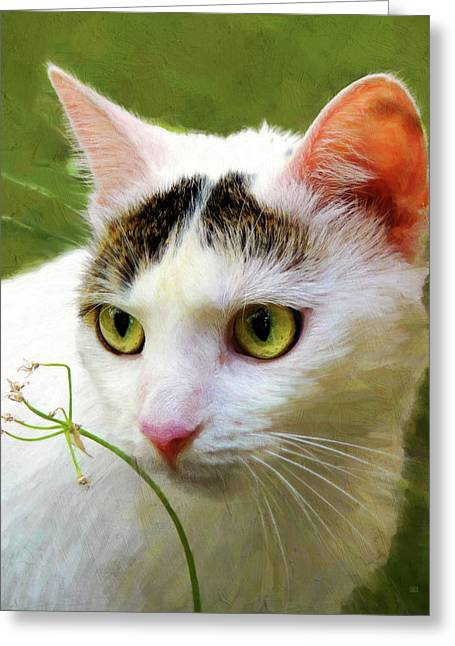Cat Enjoying The Garden Greeting Card by Menega Sabidussi