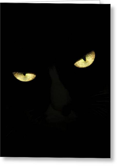 Cat Eyes II Greeting Card