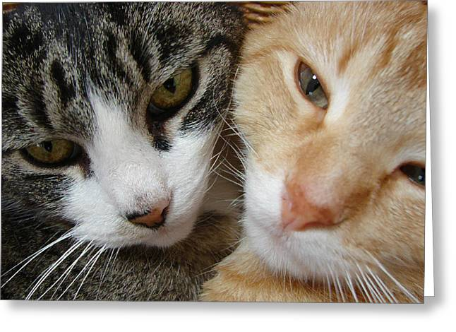 Cat Faces Greeting Card