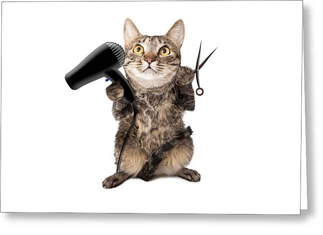 Cat Groomer With Dryer And Scissors Greeting Card by Susan Schmitz
