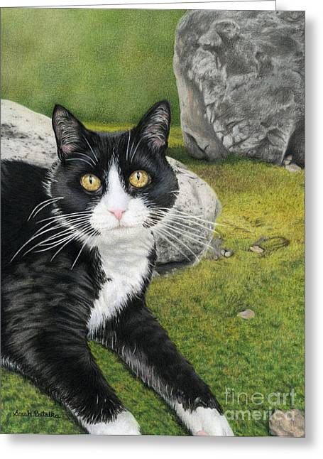 Cat In A Rock Garden Greeting Card by Sarah Batalka