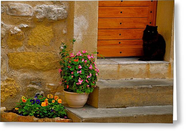 Cat In Capestang France Greeting Card by K C Lynch
