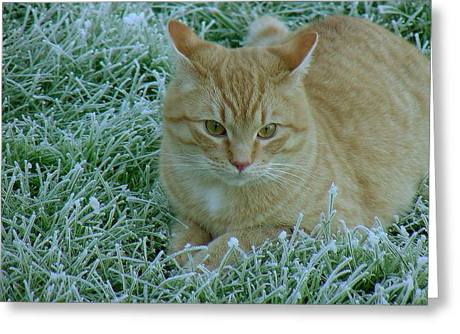 Cat In Frosty Grass Greeting Card