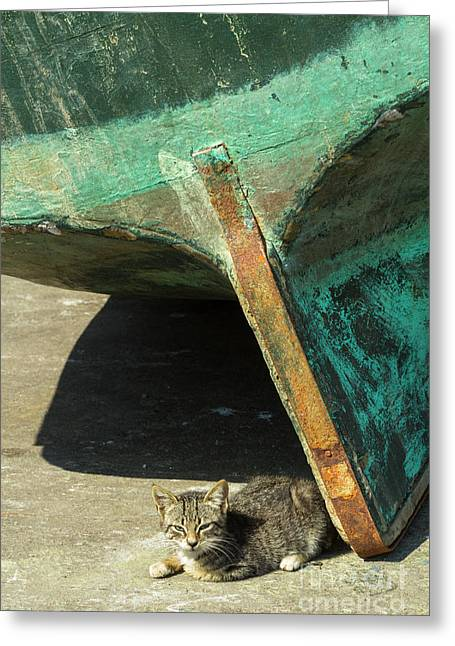 Greeting Card featuring the photograph Cat In Marina, Morocco by Brenda Tharp