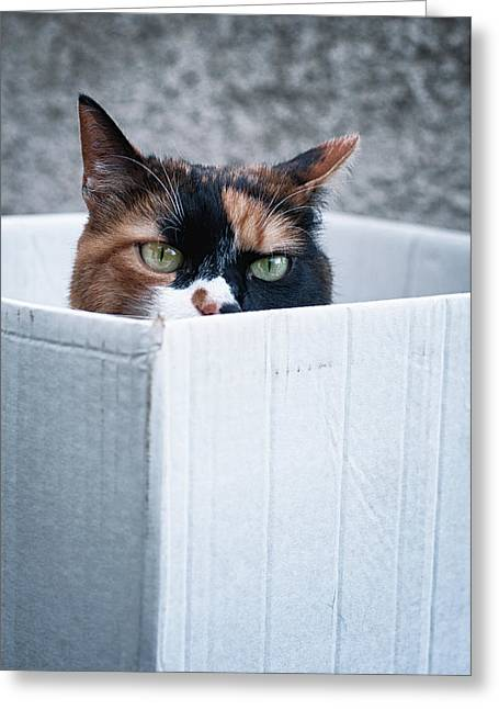 Greeting Card featuring the photograph Cat In The Box by Laura Melis