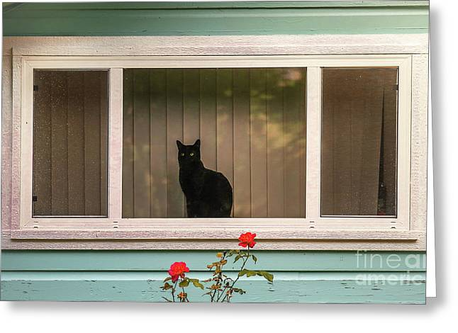 Cat In The Window Greeting Card by Robert Frederick