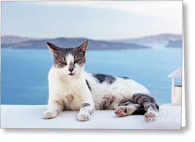 Cat Lying On Stone Wall In Oia Town, Santorini, Greece. Aegean Sea  Greeting Card