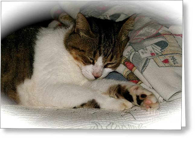 Greeting Card featuring the photograph Cat Nap by The Art of Alice Terrill