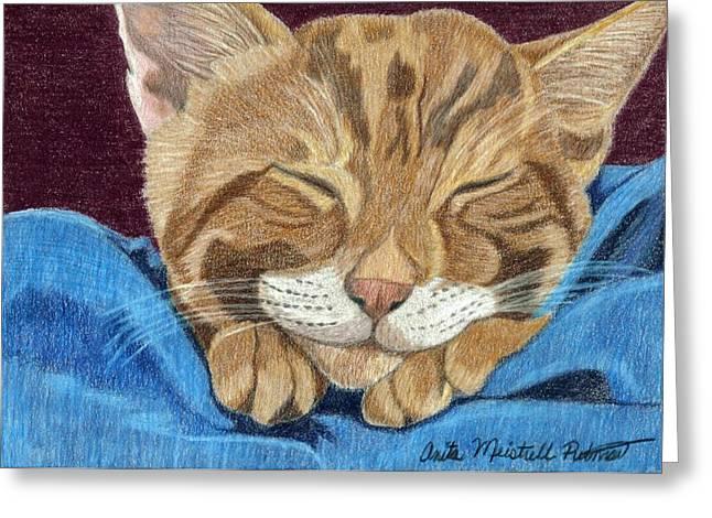 Cat Nap Greeting Card by Anita Putman