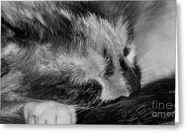 Greeting Card featuring the photograph Cat Nap by Juls Adams
