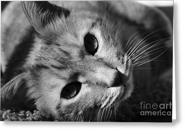 Cat Naps Greeting Card