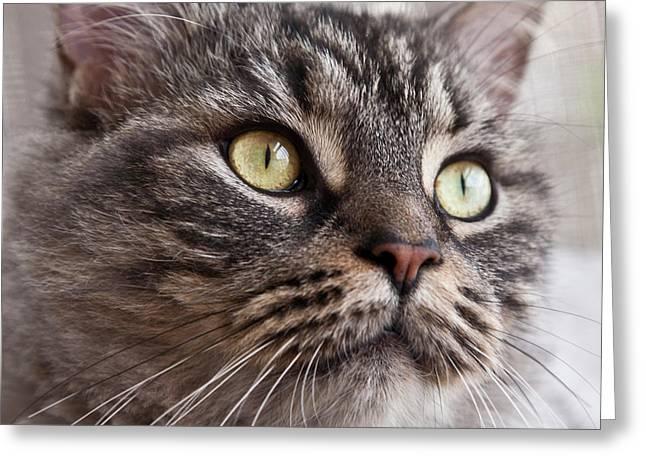 Cat Of Nicole 4 Greeting Card