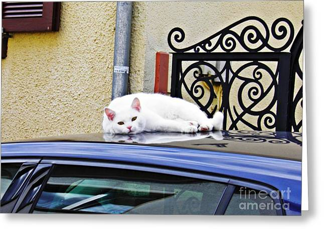 Cat On A Car Roof Greeting Card