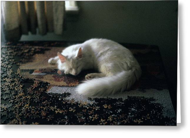 Cat On A Puzzle Greeting Card