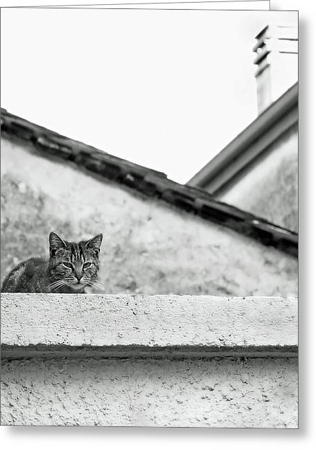 Cat On A Roof, Varenna Greeting Card
