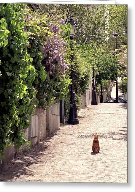 Cat On Cobblestone Greeting Card