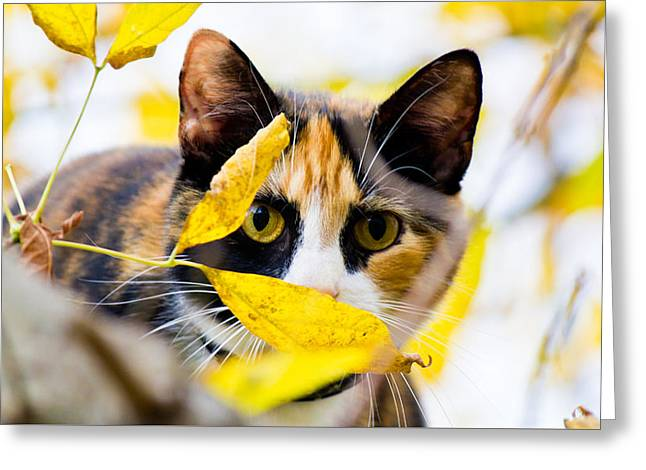 Cat On The Prowl Greeting Card by Jonny D