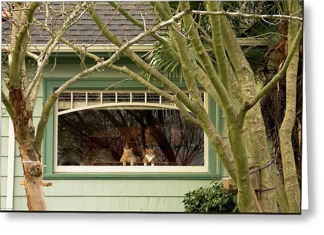 Cat Pals Waiting Greeting Card