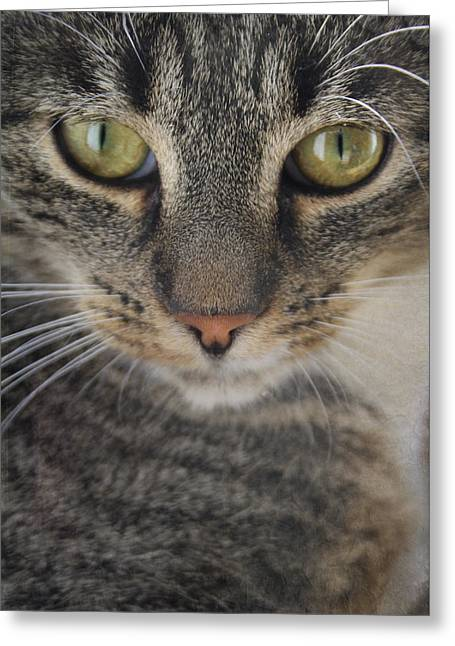Cat Portrait Greeting Card by Cambion Art