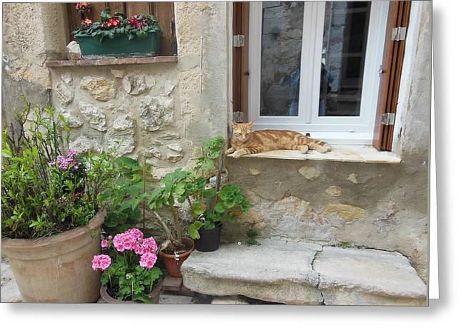 Cat Relaxing In St Paul De Vence Greeting Card