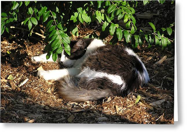 Cat Resting Under Tree Greeting Card by Richard Mitchell
