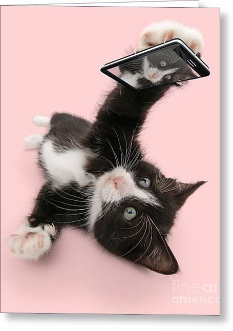 Cat Selfie Greeting Card