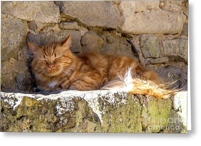 Cat Sleeping Greeting Card