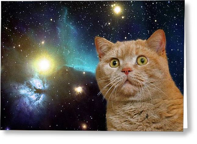 Cat Staring At The Universe Greeting Card by Johnnie Art