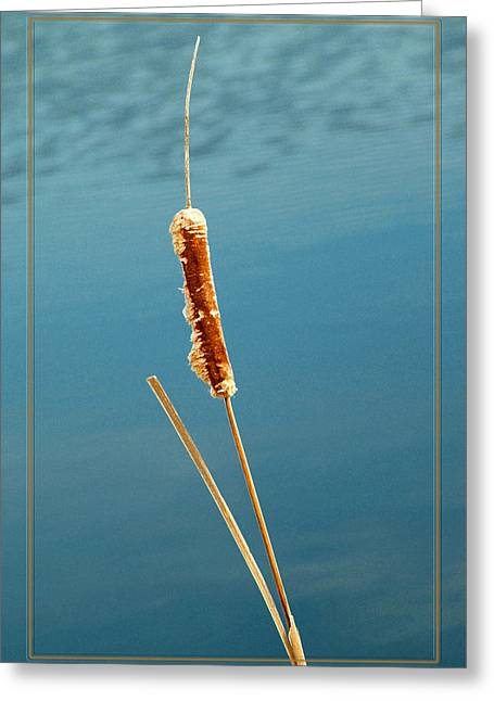 Cat Tail Greeting Card by Robert Clayton