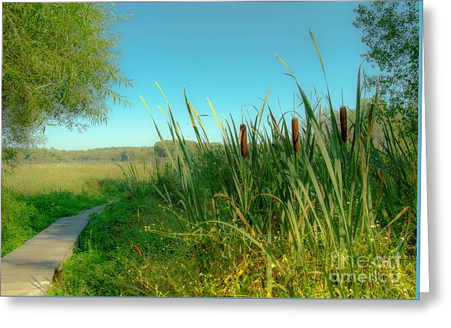 Cat Tails On The Path Greeting Card by Sabrina Ramina