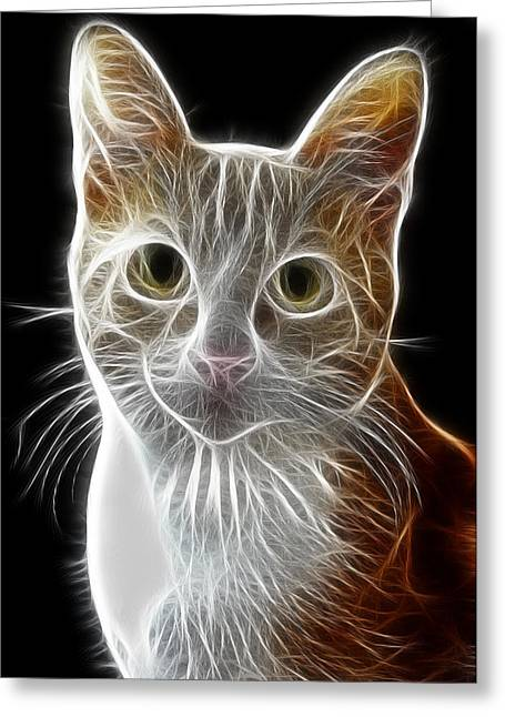Cat Greeting Card by Tilly Williams