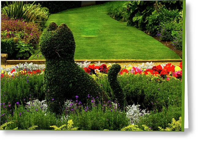 Cat Topiary Belfast Greeting Card