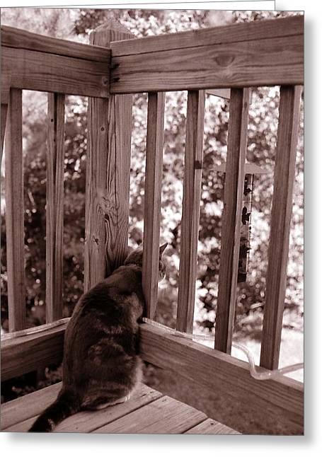 Cat Watching Birdfeeder Greeting Card