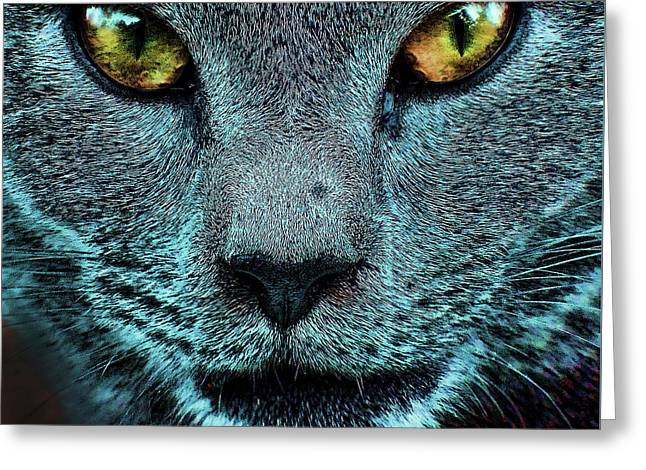 Cat With Golden Eyes Greeting Card