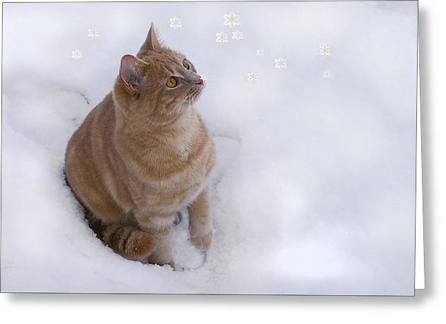 Cat With Snowflakes Greeting Card