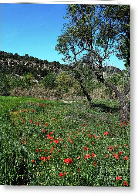 Catalan Countryside In Spring Greeting Card