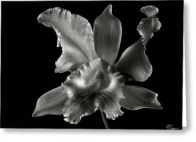 Catalea Orchid In Black And White Greeting Card by Endre Balogh