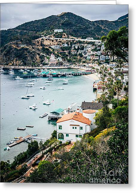 Catalina Island Avalon Bay From Above Picture Greeting Card by Paul Velgos