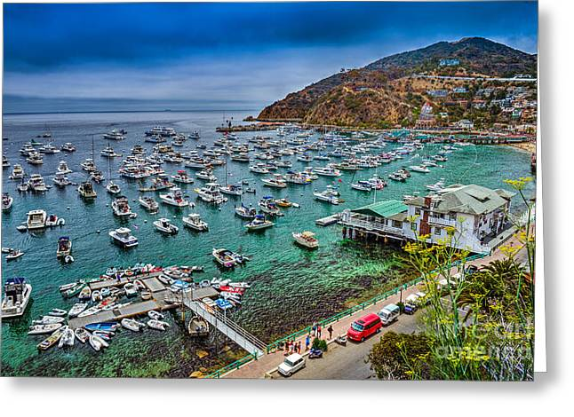 Catalina Island  Avalon Harbor Greeting Card by David Zanzinger