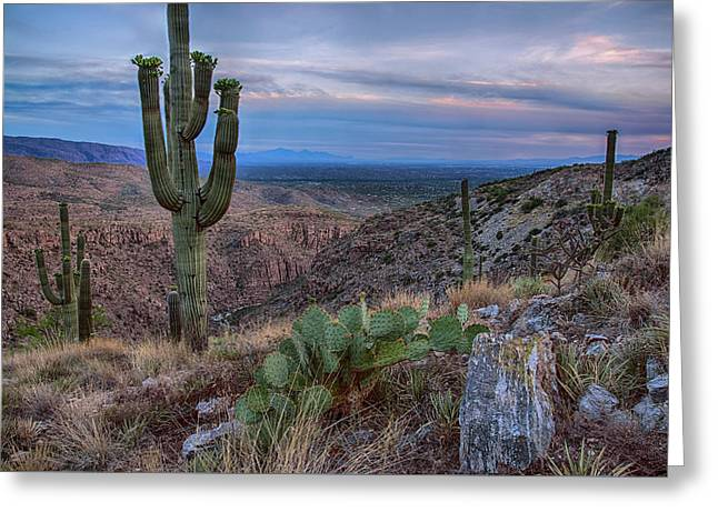 Catalina Mountains Color Sunset Greeting Card