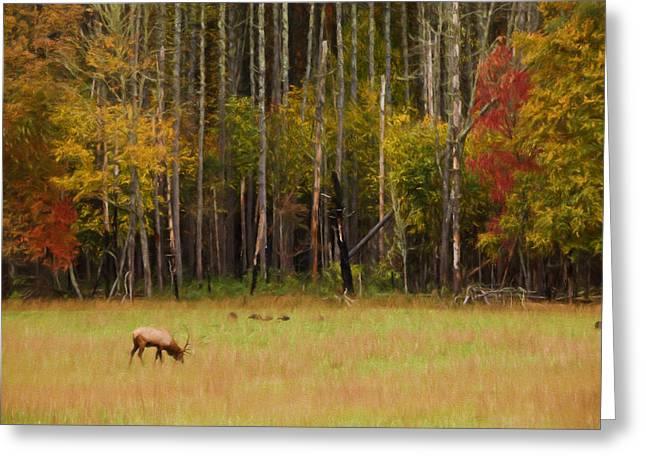 Cataloochee Valley Elk Greeting Card