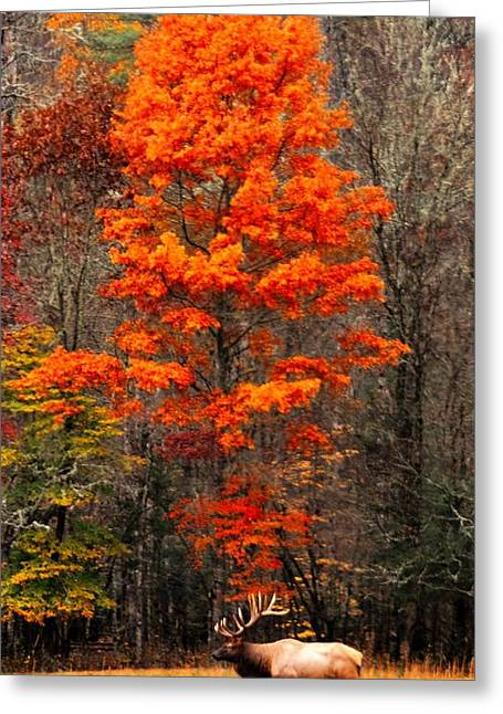 Cataloochee Color Greeting Card