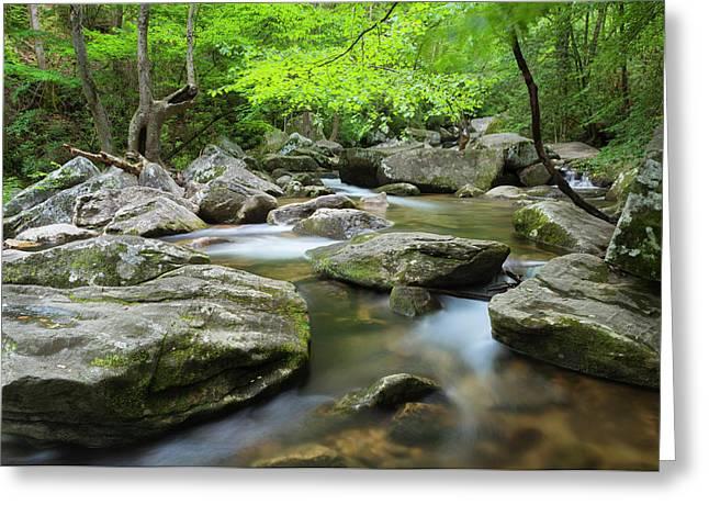 Catawba River In Summer Greeting Card