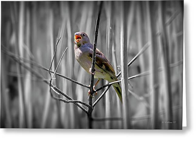 Catbird In The Reeds - Color Select Greeting Card