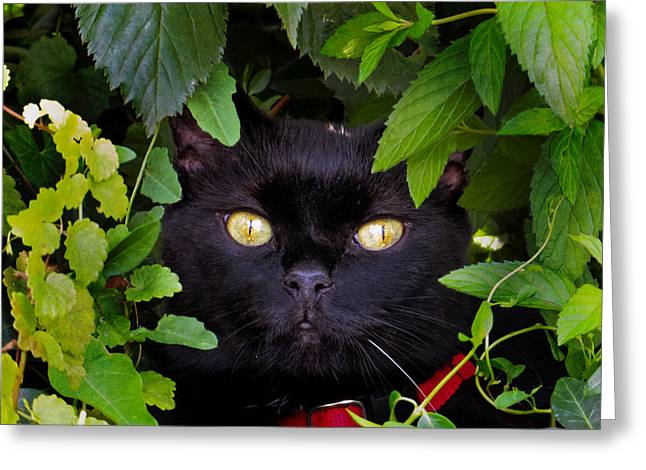 Catboo In The Wild Greeting Card
