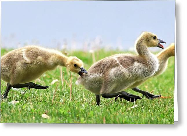Catch Me If You Can Greeting Card by Lynn Hopwood