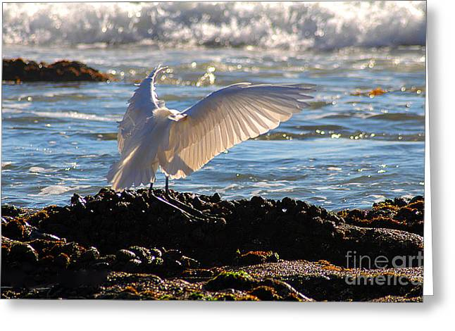 Catching Rays At The Beach Greeting Card by Clayton Bruster