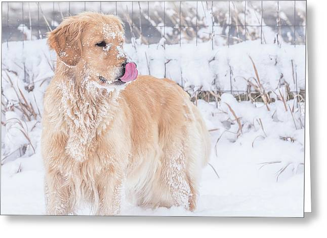 Catching Snowflakes Greeting Card