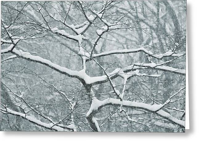 Catching The Snow Greeting Card by JAMART Photography