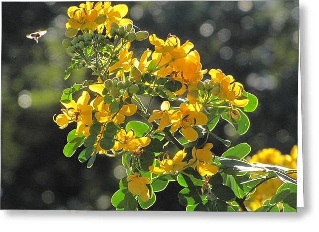 Catchlight Bee Over Yellow Blooms Greeting Card